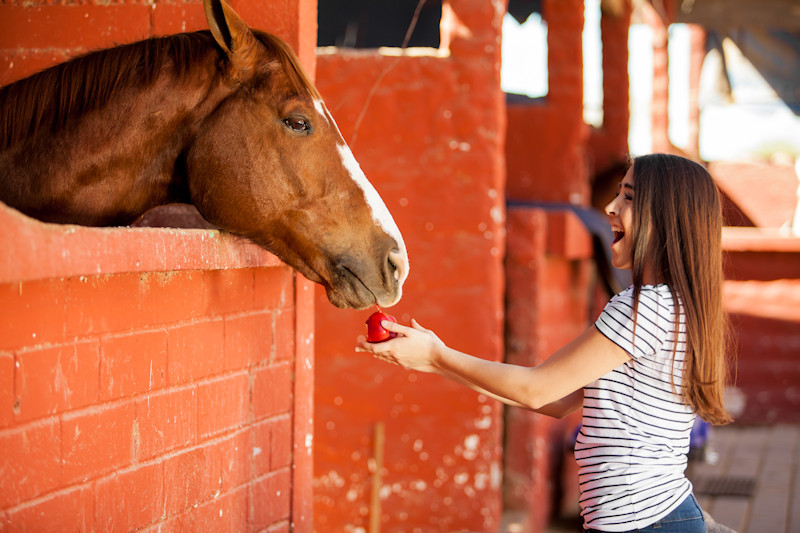 Girl feeds an apple to a horse