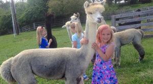 Girl hugging alpaca