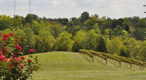 River Valley Winery (Exit 43)